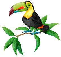 picture free Free art downloads . Toucan vector