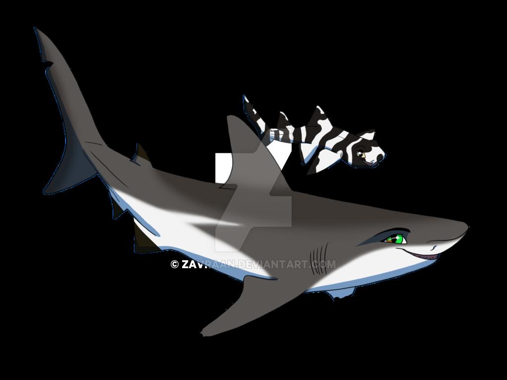 jpg royalty free Laura the by zavraan. Drawing sharks leopard shark