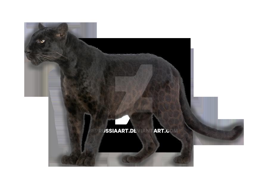 19 Transparent Animal Black Panther Huge Freebie Download