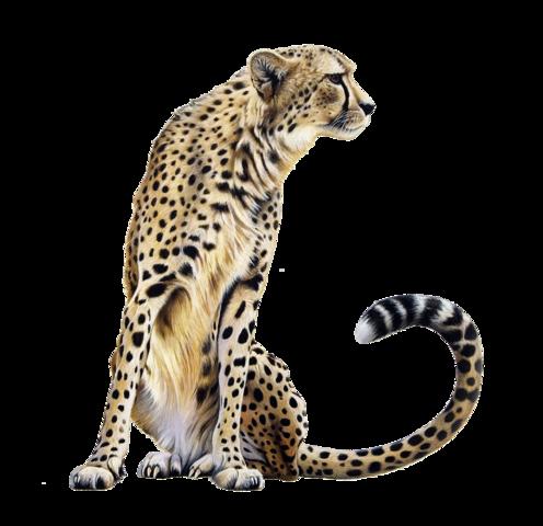 clip art black and white cheetah transparent file #110531851
