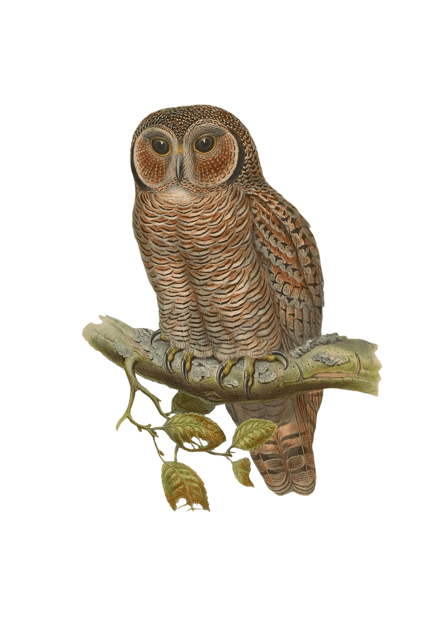 clipart free stock Transparent png stickpng animals. Drawing owl barn