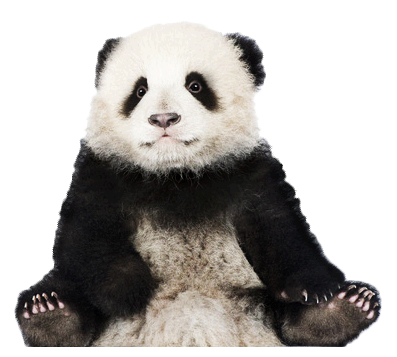 banner transparent library Collection of free Panda transparent