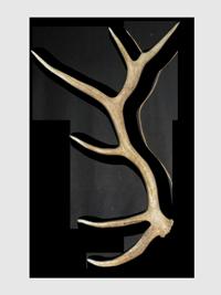 clip art black and white stock elkantler