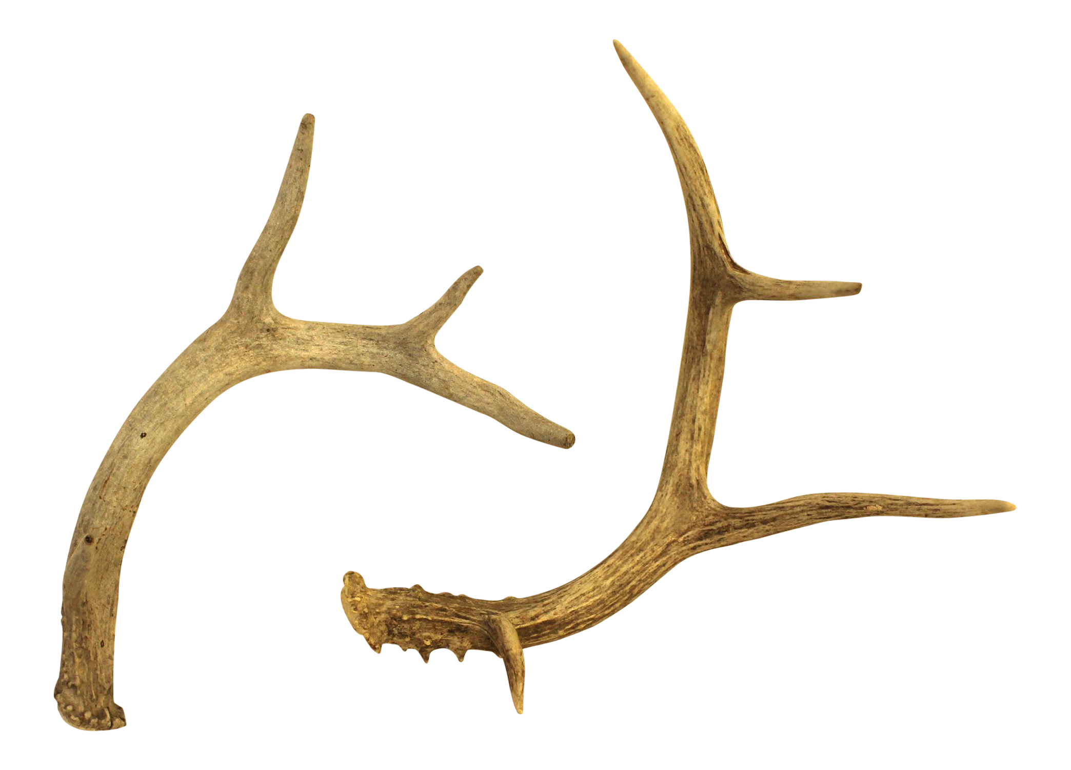 clip library download antlers transparent pair #109551267