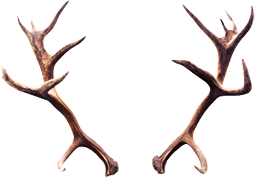 png black and white stock antlers transparent real #109553366