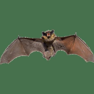 svg freeuse Transparent bat. Bats png images stickpng