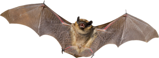 graphic transparent stock Tumblr . Vampire transparent bat