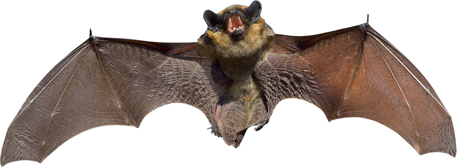 banner royalty free download Vampire transparent bat.  fruit png for