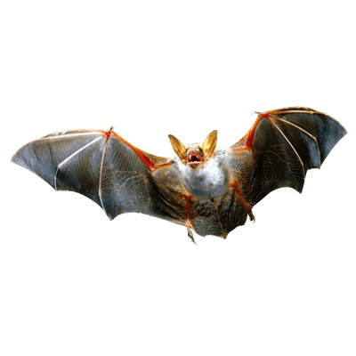 clip Vampire transparent bat. Png stickpng