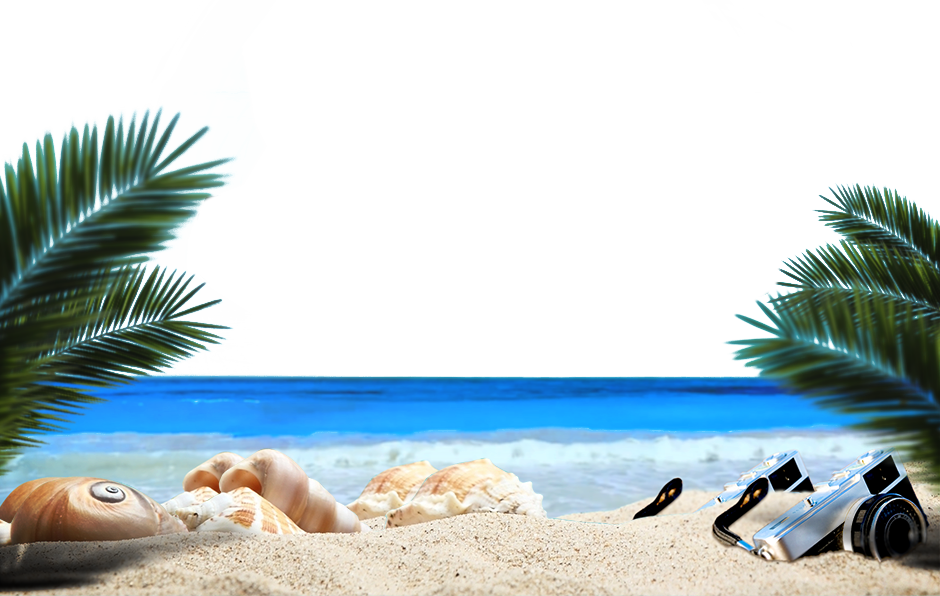 graphic royalty free Beach transparent sea. Ocean sandy plant transprent