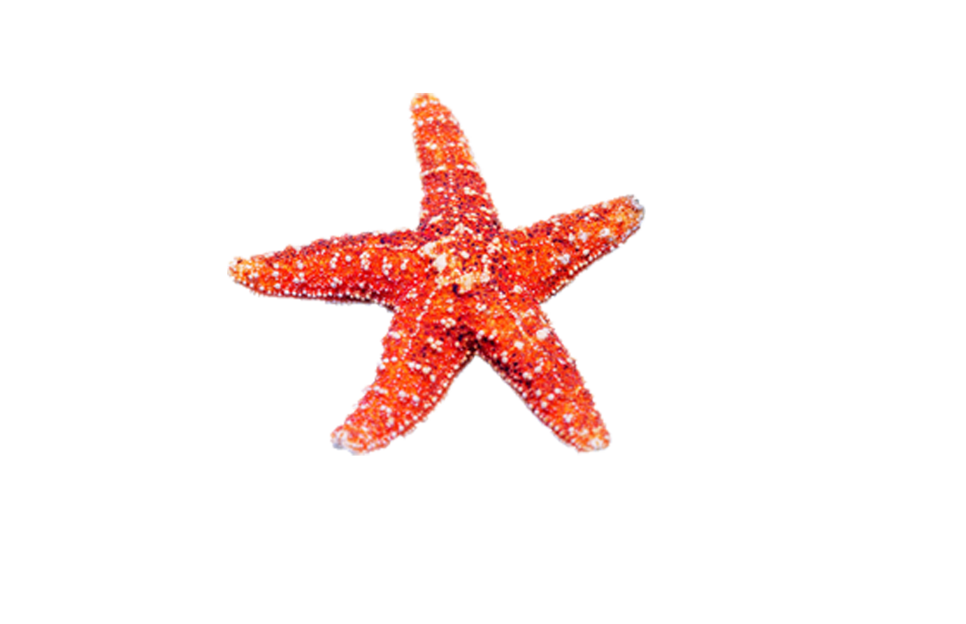 banner royalty free download Beach transparent starfish. Sea transprent png free