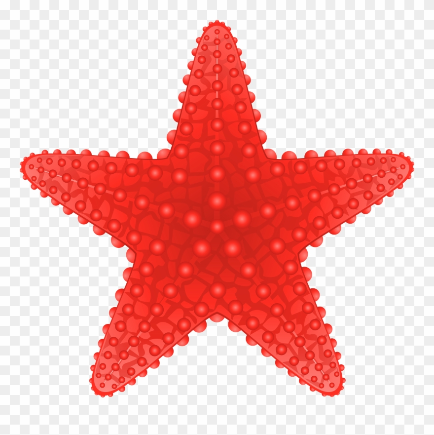 clip Beach transparent starfish. Png clip art image