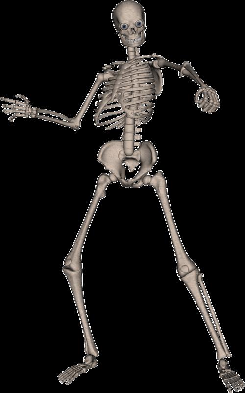 clip black and white stock Bone transparent full body. Skeleton skull png image