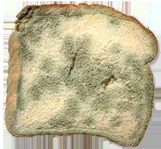 png transparent transparent bread mouldy #116577699