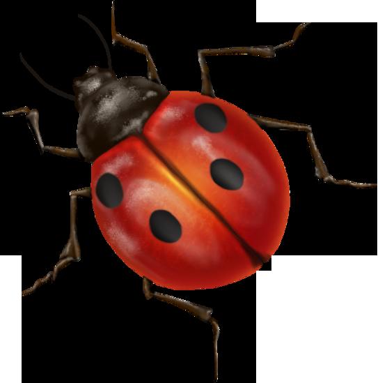 clipart True Bug Transparent PNG