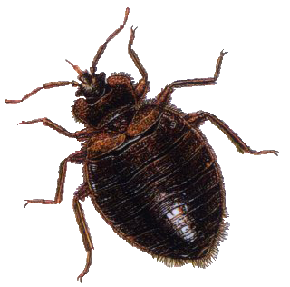 clipart library download bug PNG image