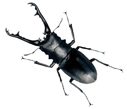 svg library Beetle Bug PNG Transparent Image
