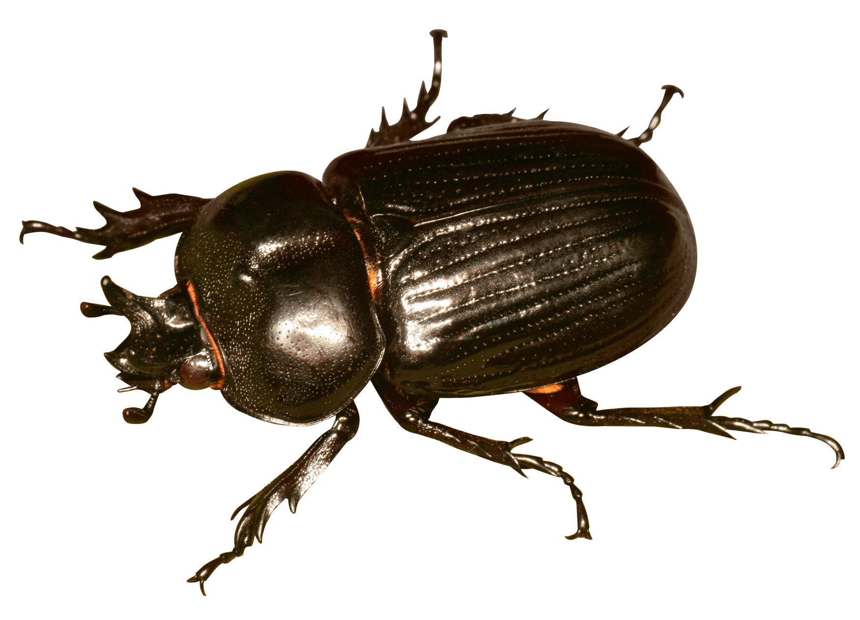 download transparent bug insect #116588979