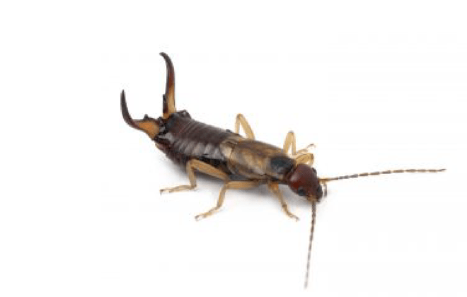 svg library download Identify What Pest Are In Your Home