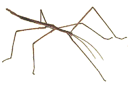 clipart freeuse transparent bug stick #116591037