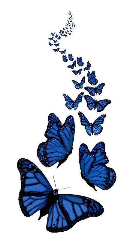 picture library Transparent butterflies. Trail of the blue
