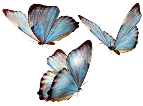 picture royalty free stock Png pictures free icons. Transparent butterflies