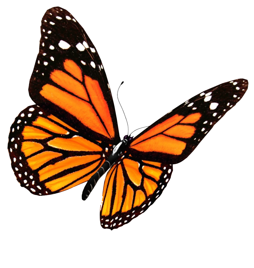 clipart free Transparent butterflies. Flying png image mart
