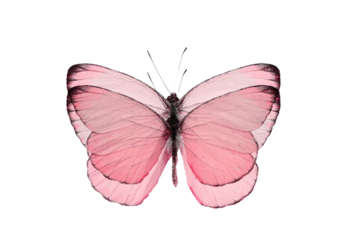 png free Tumblr jessicamaccormackrmack. Transparent butterflies