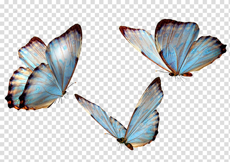 picture freeuse Transparent butterflies. Three butterfly