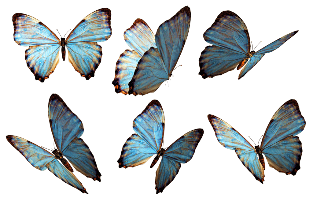 banner library download Group blue png stickpng. Transparent butterflies