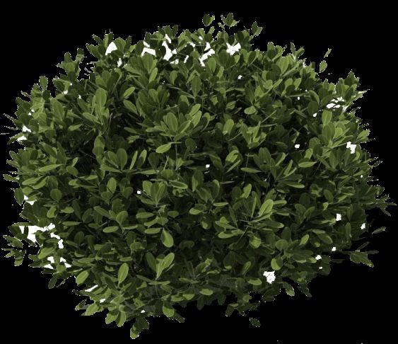 vector Bush dark green png. Bushes transparent