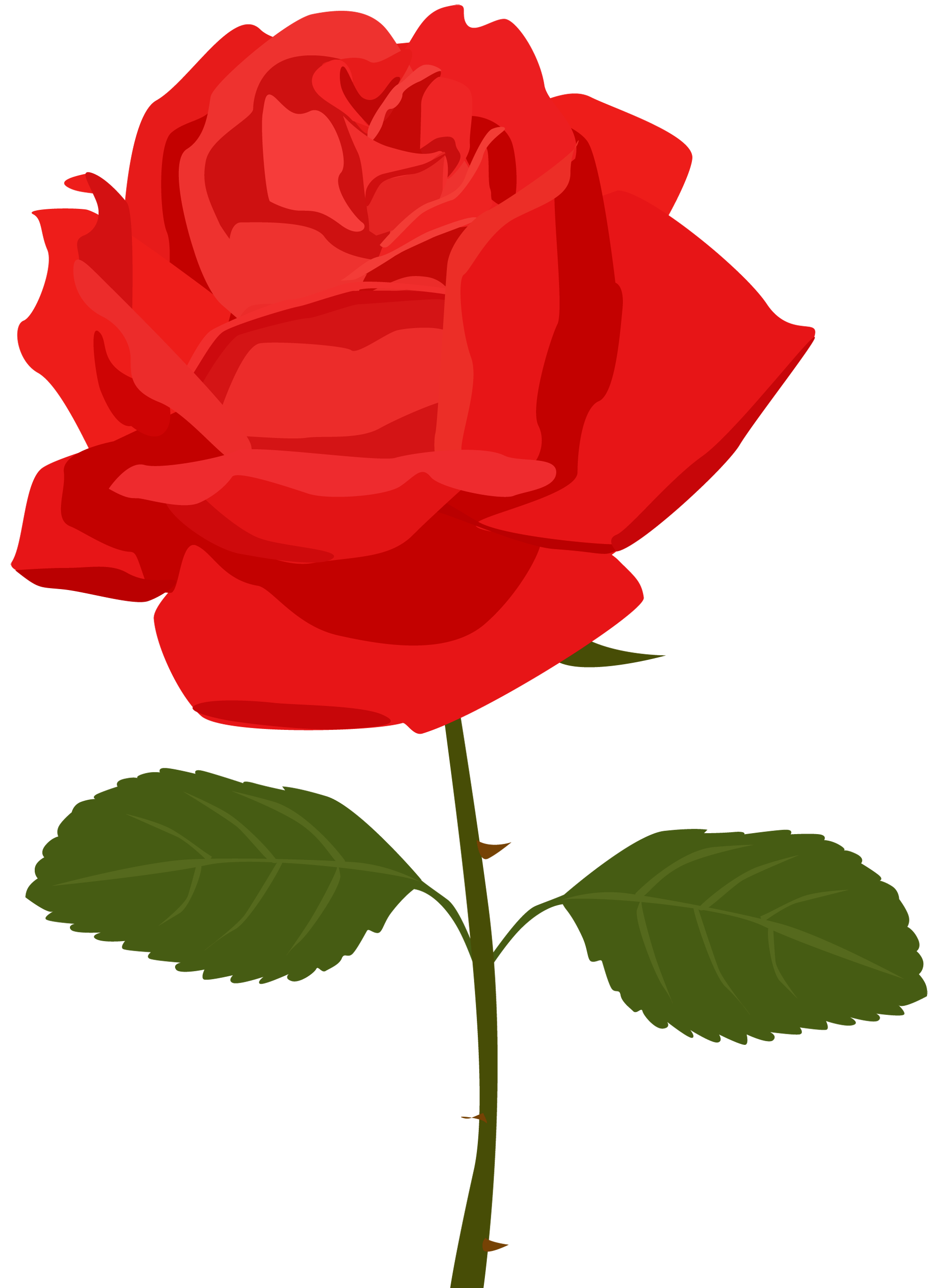 svg free library Transparent red rose picture. Roses clipart png.