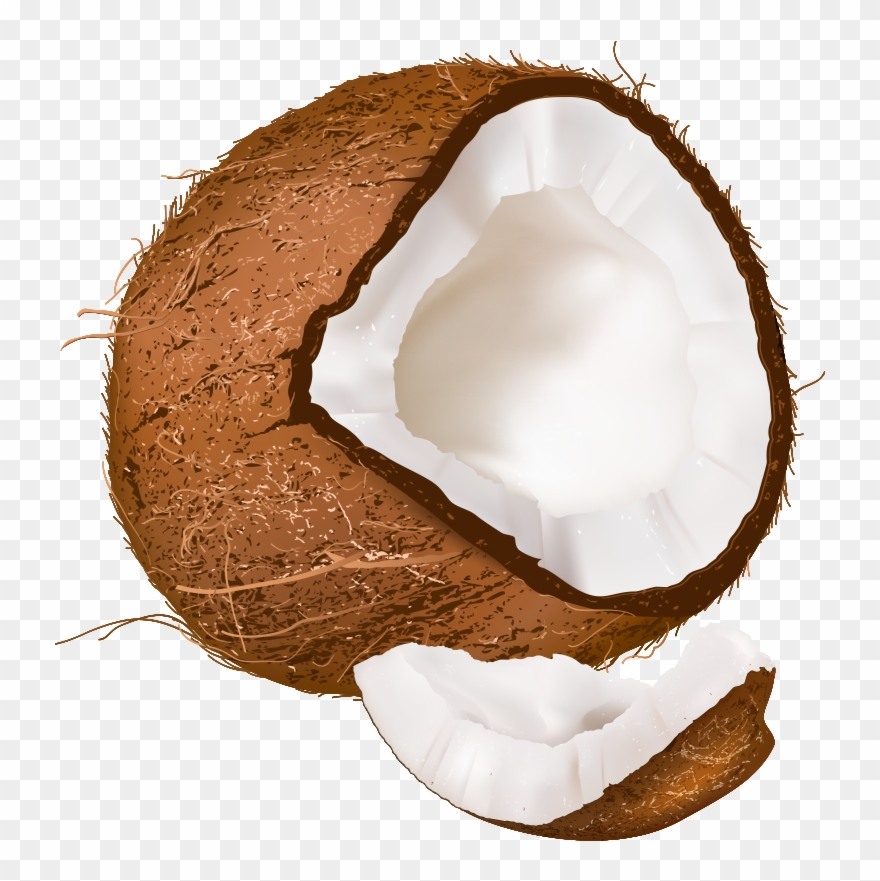 free Clipart clear background . Transparent coconut.