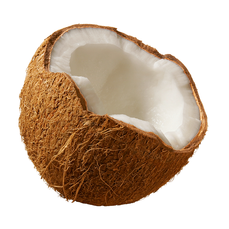 picture royalty free Transparent coconut. Png image purepng free.