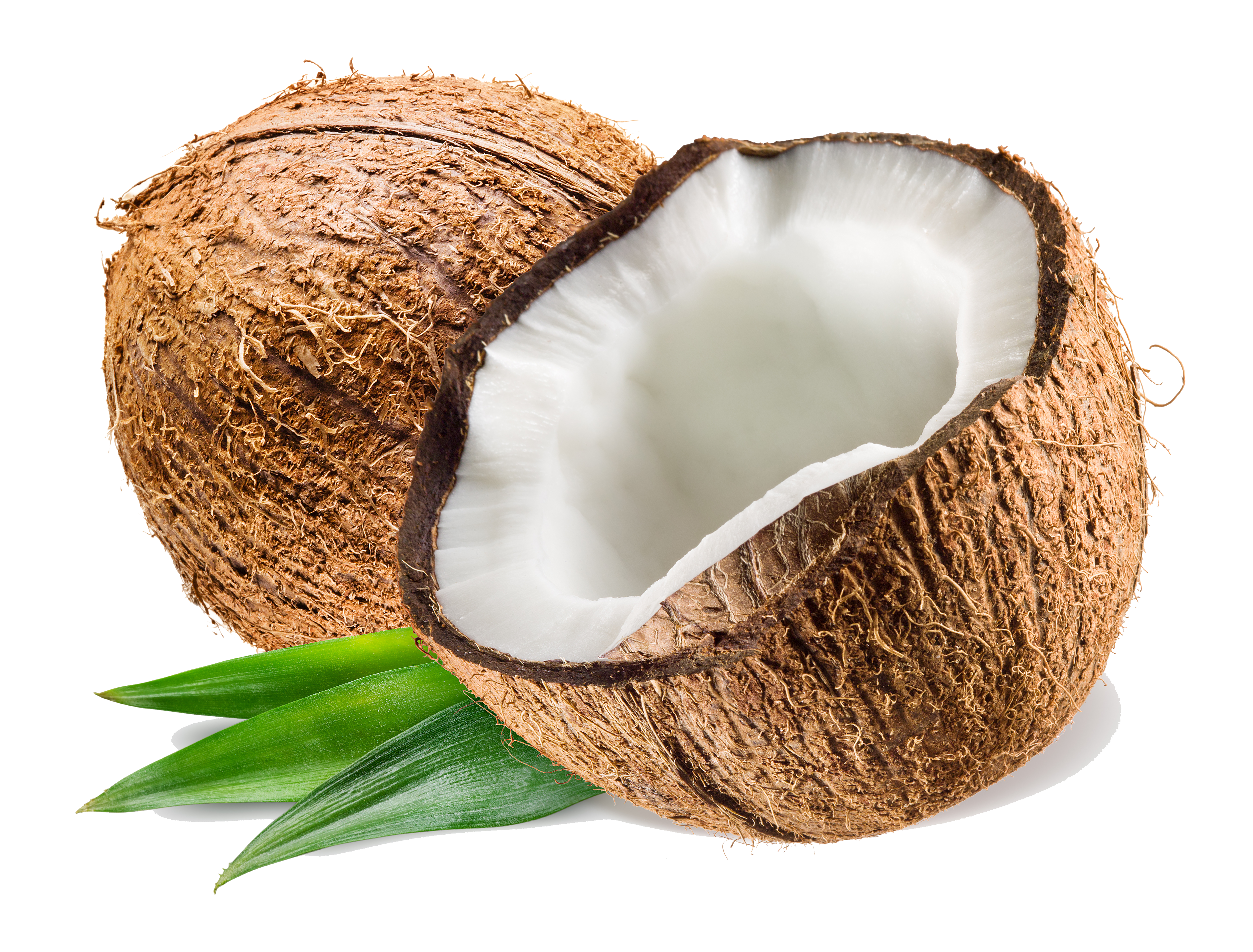 image library stock Transparent coconut. Png imag .