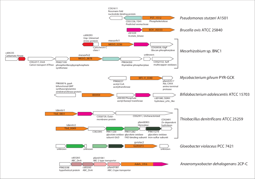 banner transparent Schematic representation of selected clusters containing xfp genes