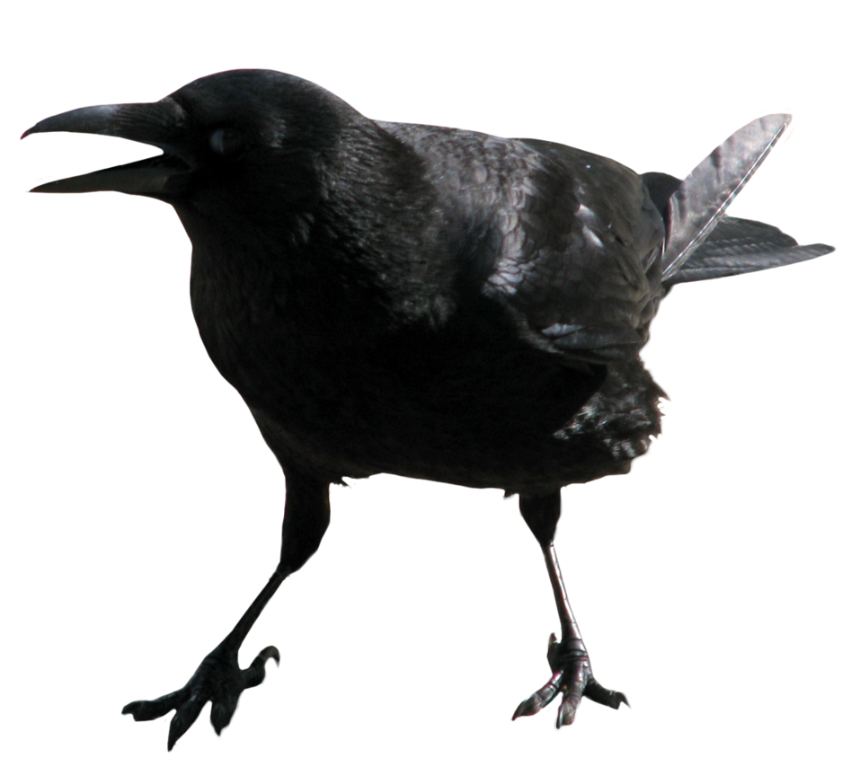 clip black and white library Crow PNG image