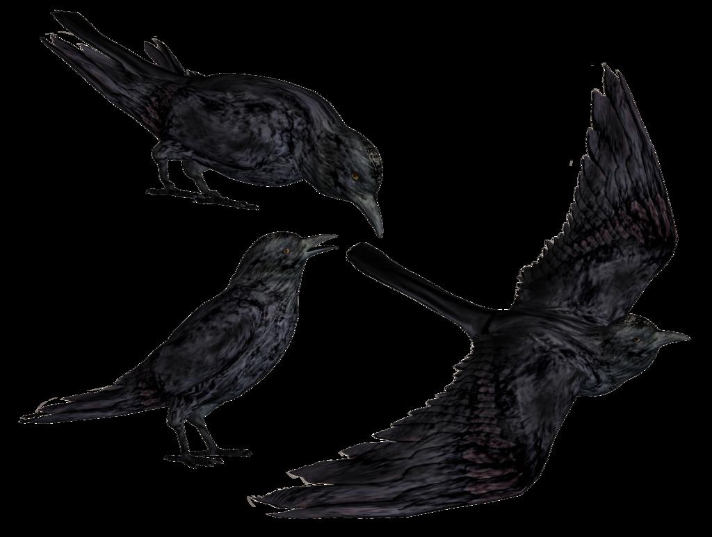 jpg download Crow HD PNG Transparent Crow HD