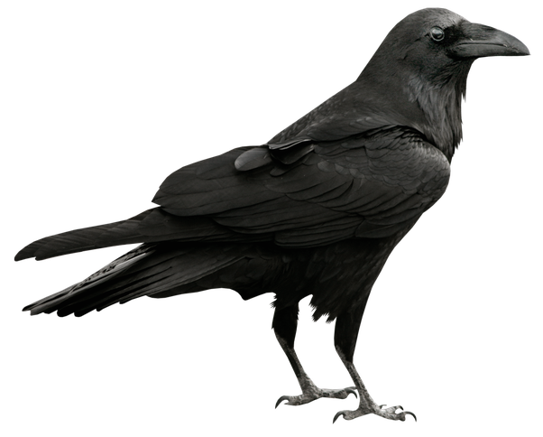stock What is the exact difference between the raven and crow