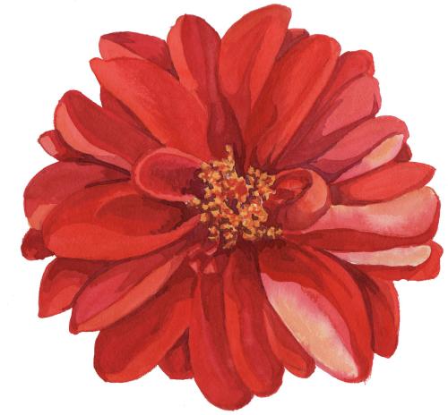 clip art Image result for transparent flower drawing png