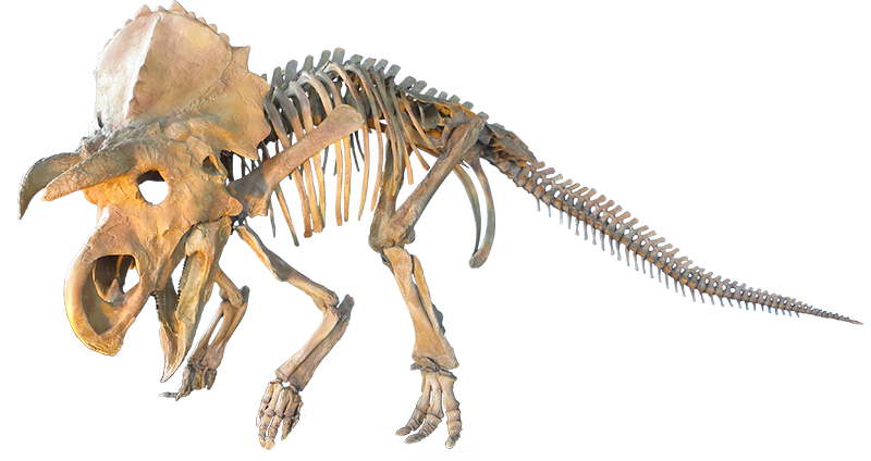 jpg transparent download  bone for free. Bones transparent dinosaur