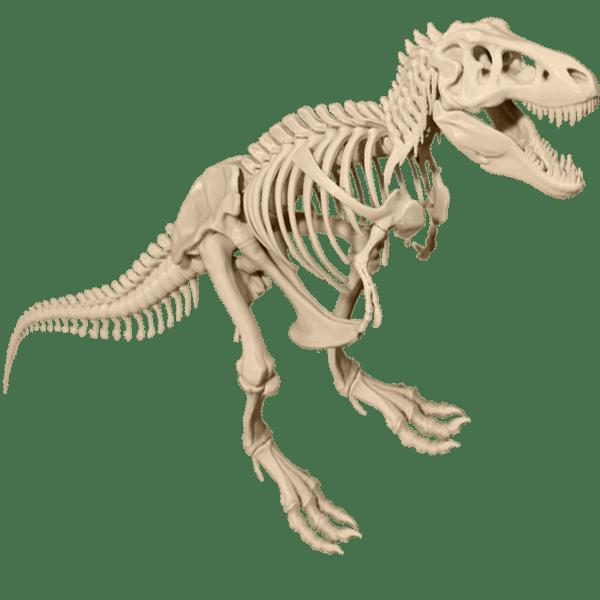 clip art freeuse library  dinosaur png for. Bones transparent t rex