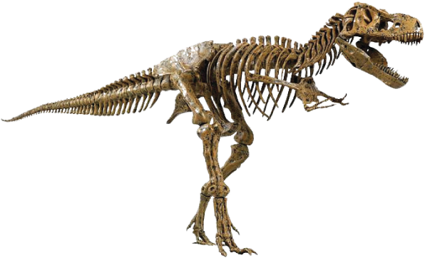 vector library download  for free download. Bones transparent dinosaur