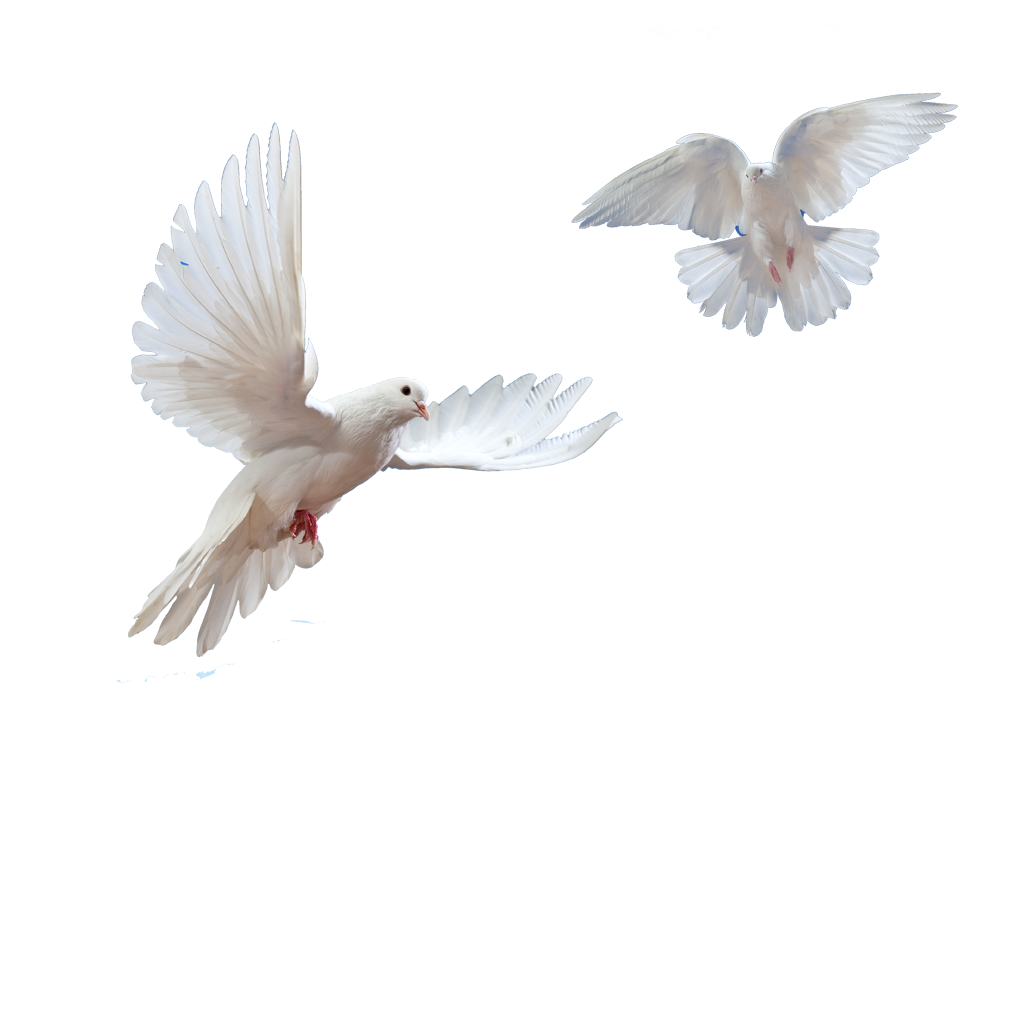 image freeuse library Dove Transparent PNG Pictures