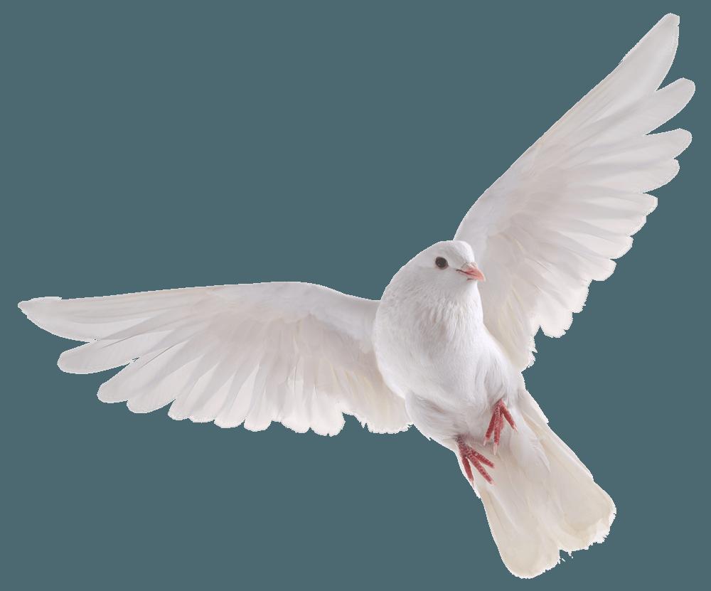 banner free library Bird HD PNG Transparent Bird HD