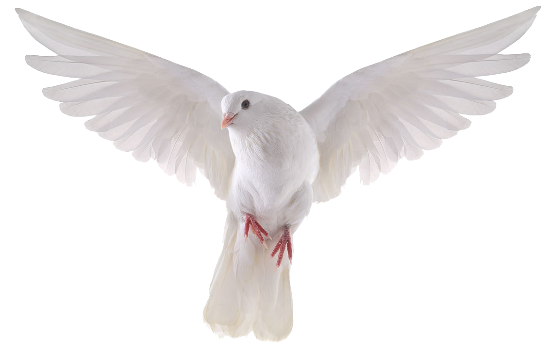picture free download Dove Transparent PNG Pictures