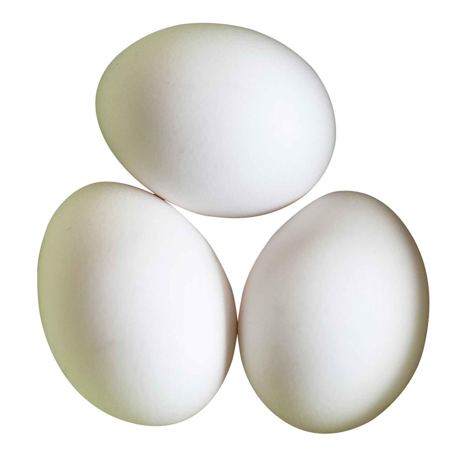 image royalty free library Transparent eggs. Egg white png download