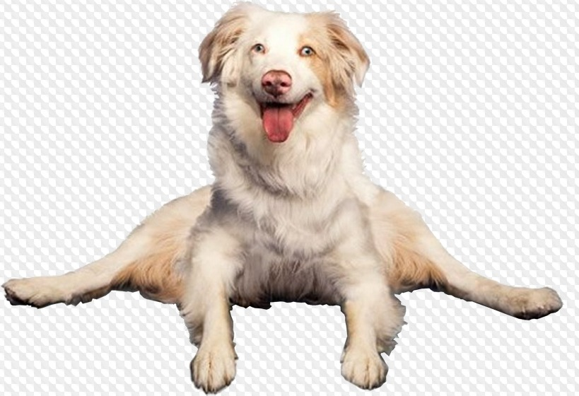 download Transparent funny. Psd png dogs on.