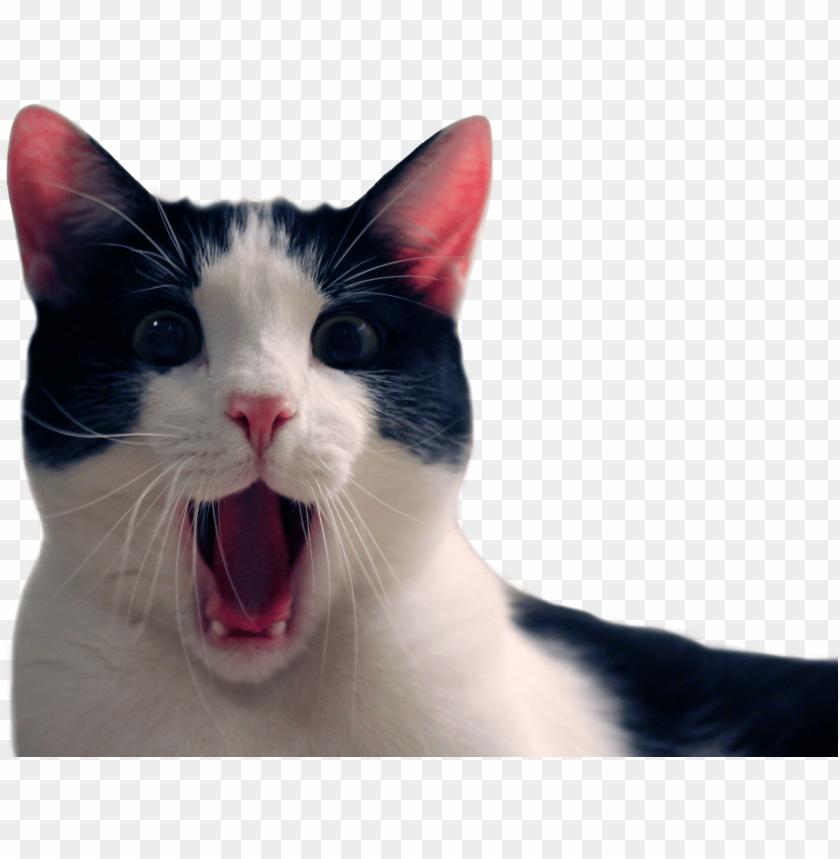 clip art free download Animalcat cat background png. Transparent funny.