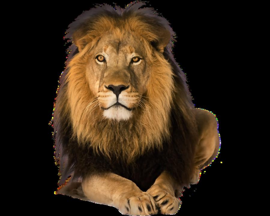 clip free stock Transparent lion. Predator on a background